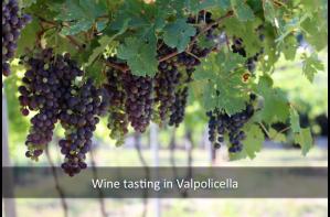 wine tasting valpolicella